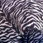 Zebra Print Bunk Bed Sheets